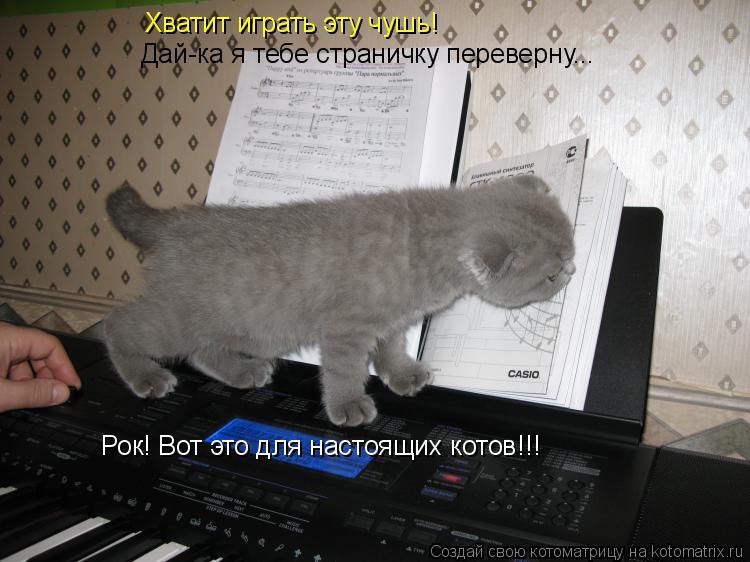 Котоматрица: Хватит играть эту чушь!  Дай-ка я тебе страничку переверну... Рок! Вот это для настоящих котов!!!