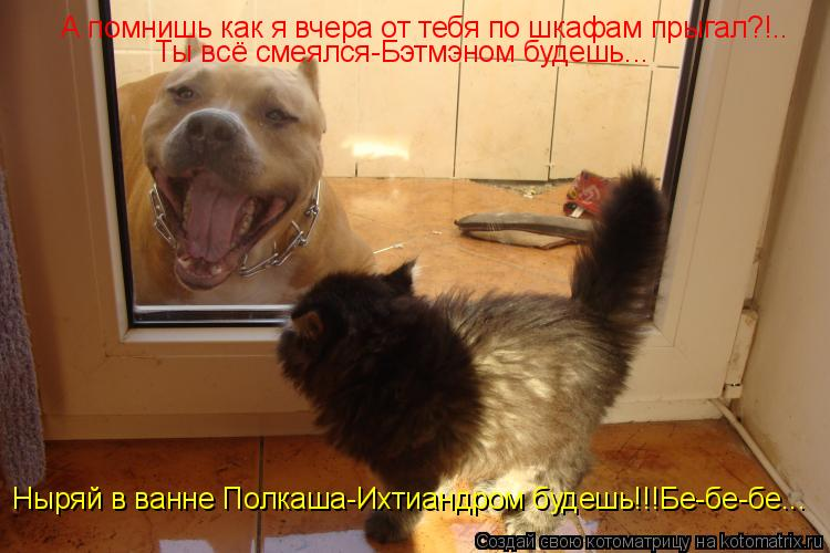 Котоматрица: А помнишь как я вчера от тебя по шкафам прыгал?!.. Ты всё смеялся-Бэтмэном будешь... Ныряй в ванне Полкаша-Ихтиандром будешь!!!Бе-бе-бе...