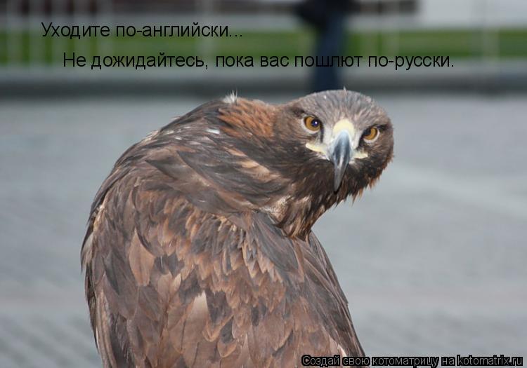 Котоматрица: Уходите по-английски...   Не дожидайтесь, пока вас пошлют по-русски.