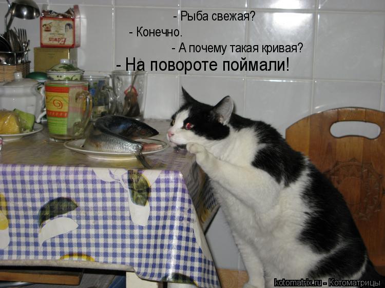 Котоматрица: - Рыба свежая? - Конечно. - А почему такая кривая? - На повороте поймали!