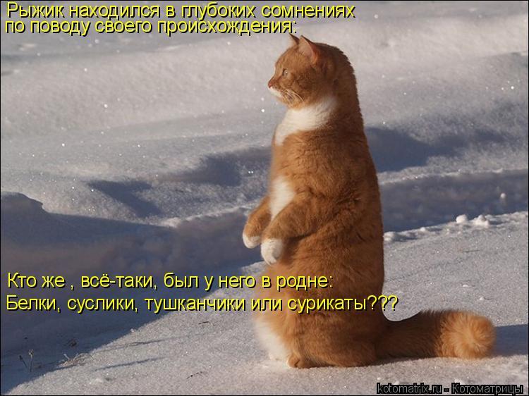 Котоматрица: Рыжик находился в глубоких сомнениях по поводу своего происхождения: Кто же , всё-таки, был у него в родне: Белки, суслики, тушканчики или сур