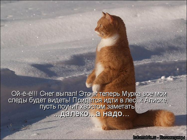Котоматрица: Ой-ё-ё!!! Снег выпал! Это ж теперь Мурка все мои следы будет видеть! Придется идти в лес, к Алиске, пусть поучит хвостом заметать... ...далеко...а н