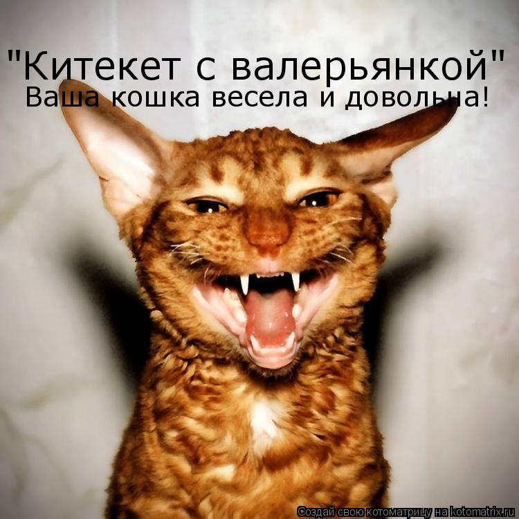 """Котоматрица: """"Китекет с валерьянкой"""" !!! Ваша кошка весела и довольна!"""