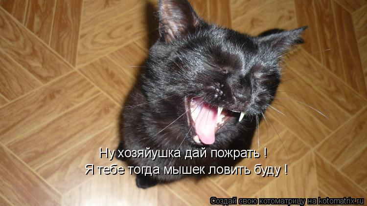 Котоматрица: Ну хозяйушка дай пожрать !  Я тебе тогда мышек ловить буду !