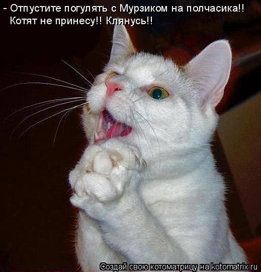 Котоматрица: - Отпустите погулять с Мурзиком на полчасика!! Котят не принесу!! Клянусь!!