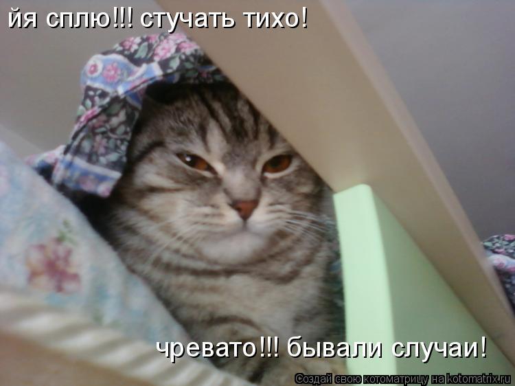 Котоматрица: йя сплю!!! стучать тихо! чревато!!! бывали случаи!