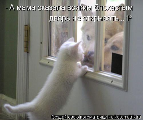 Котоматрица: - А мама сказала всяким блохастым  дверь не открывать...:Р