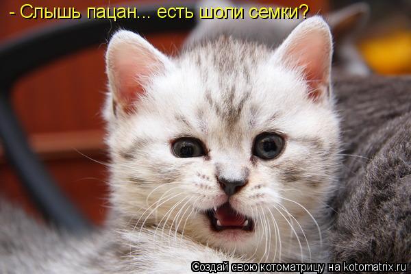 Котоматрица: - Слышь пацан... есть шоли семки?