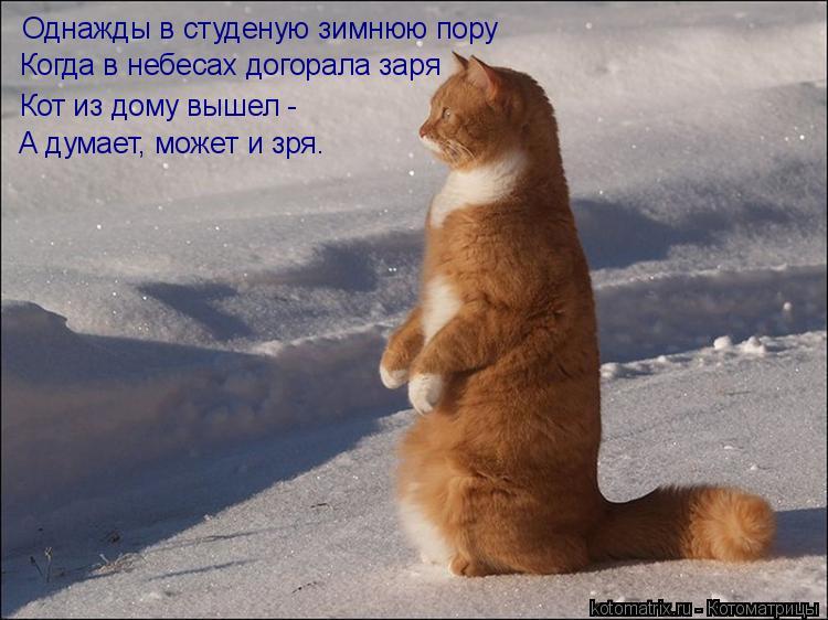 Котоматрица: Однажды в студеную зимнюю пору Когда в небесах догорала заря Кот из дому вышел -  А думает, может и зря.