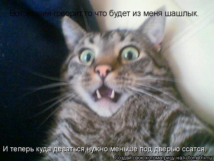 Котоматрица: Вот хозяин говорит,то что будет из меня шашлык. И теперь куда деваться,нужно меньше под дверью ссатся.