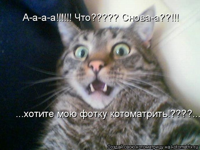 Котоматрица: А-а-а-а!!!!!! Что????? Снова-а??!!! ...хотите мою фотку котоматрить!????...
