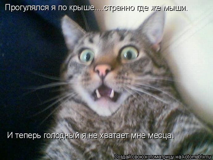 Котоматрица: Прогулялся я по крыше....странно где же мыши. И теперь голодный я,не хватает мне месца.