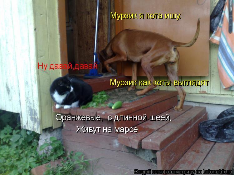 Котоматрица: Мурзик я кота ишу.  Ну давай,давай Мурзик как коты выглядят Оранжевые,  с длинной шеей,  Живут на марсе