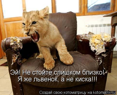 Котоматрица: Эй! Не стойте слишком близко! Я же львенок, а не киска!!!