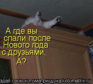 Котоматрица: А где вы спали после Нового года с друзьями, А?