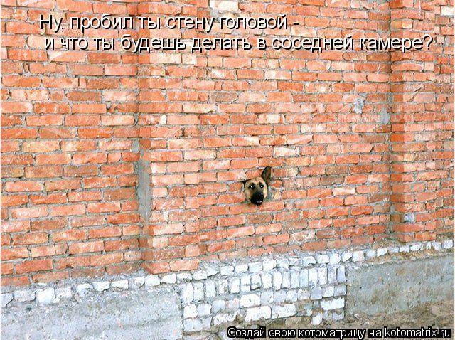 Котоматрица: Ну, пробил ты стену головой - и что ты будешь делать в соседней камере?