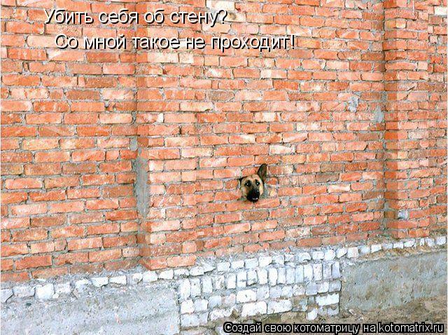 Котоматрица: Убить себя об стену? Со мной такое не проходит!