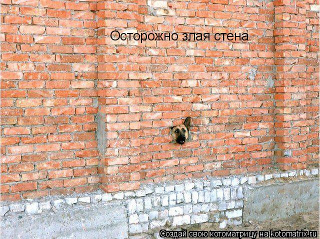 Котоматрица: Осторожно злая стена.