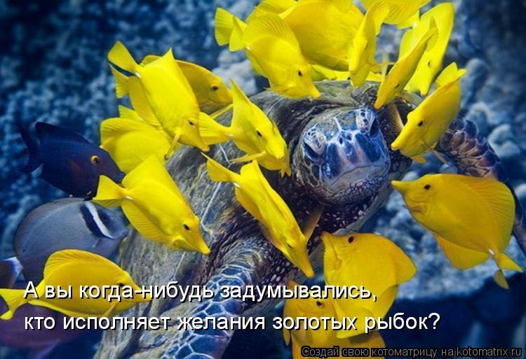 Котоматрица: А вы когда-нибудь задумывались, кто исполняет желания золотых рыбок?
