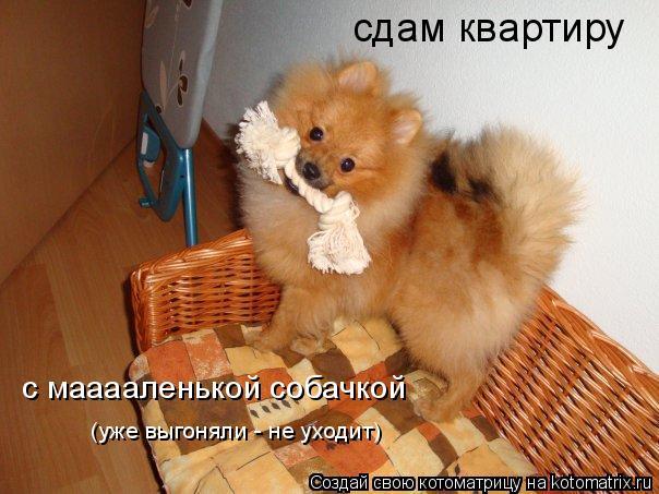 Котоматрица: сдам квартиру с мааааленькой собачкой (уже выгоняли - не уходит)