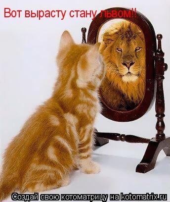 Котоматрица: Вот вырасту стану львом!!
