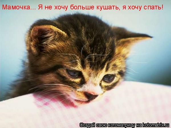 Котоматрица: Мамочка... Я не хочу больше кушать, я хочу спать!