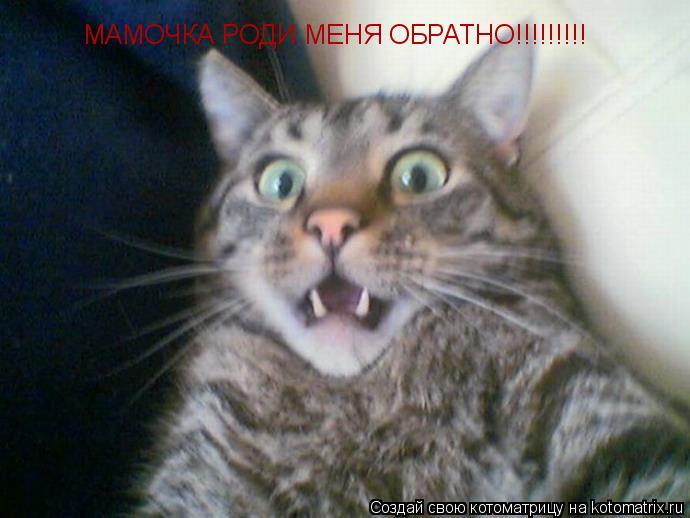Котоматрица: МАМОЧКА РОДИ МЕНЯ ОБРАТНО!!!!!!!!!