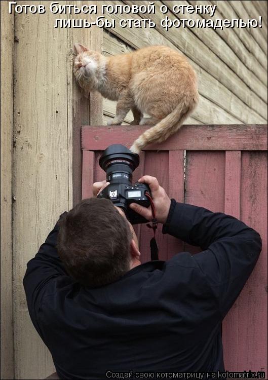 Котоматрица: Готов биться головой о стенку лишь-бы стать фотомаделью!