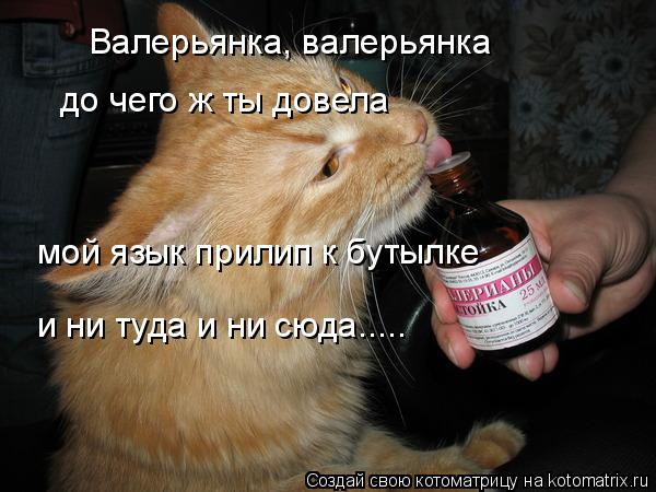 Котоматрица: Валерьянка, валерьянка  до чего ж ты довела мой язык прилип к бутылке  и ни туда и ни сюда.....