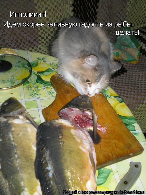 Котоматрица: Ипполииит! Идём скорее заливную гадость из рыбы   делать!