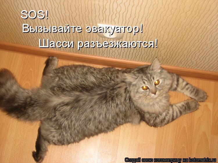 Котоматрица: SOS! Вызывайте эвакуатор! Шасси разъезжаются!