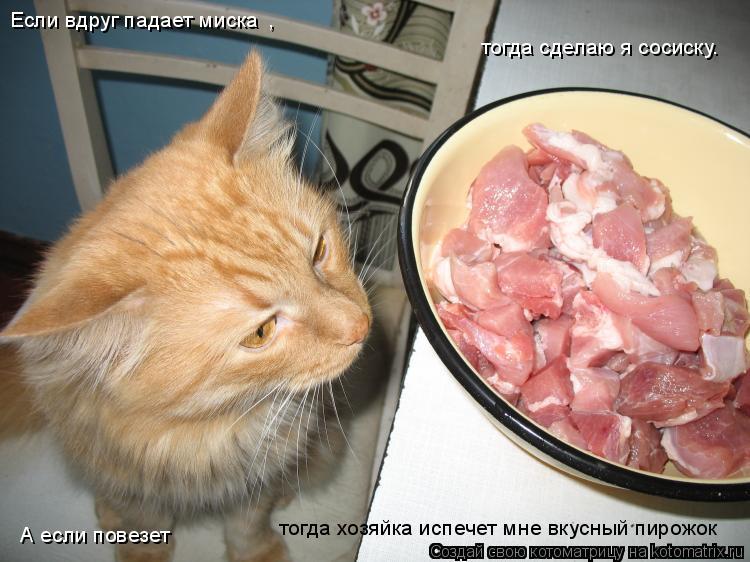 Котоматрица: , тогда сделаю я сосиску. А если повезет тогда хозяйка испечет мне вкусный пирожок Если вдруг падает миска