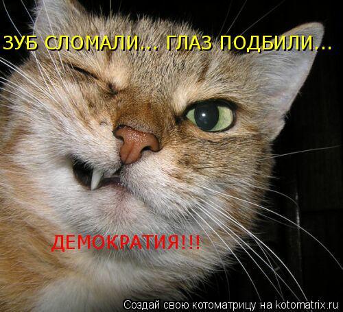 Котоматрица: ЗУБ СЛОМАЛИ... ГЛАЗ ПОДБИЛИ... ДЕМОКРАТИЯ!!!