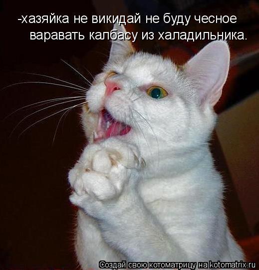 Котоматрица: -хазяйка не викидай не буду чесное  варавать калбасу из халадильника.