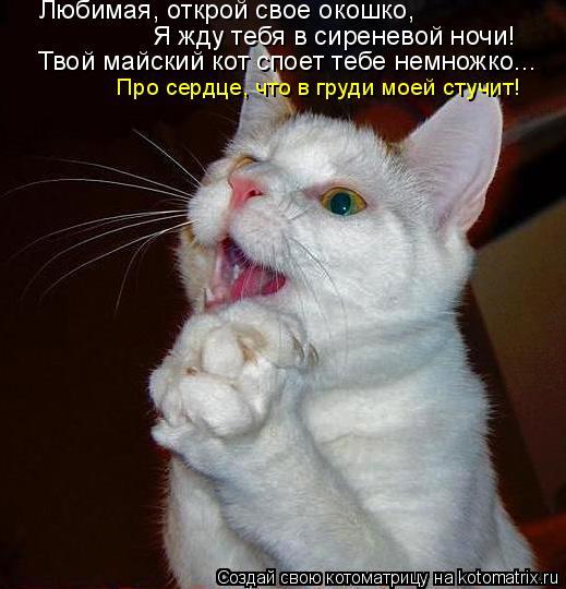 Котоматрица: Твой майский кот споет тебе немножко... Про сердце, что в груди моей стучит! Я жду тебя в сиреневой ночи! Любимая, открой свое окошко,