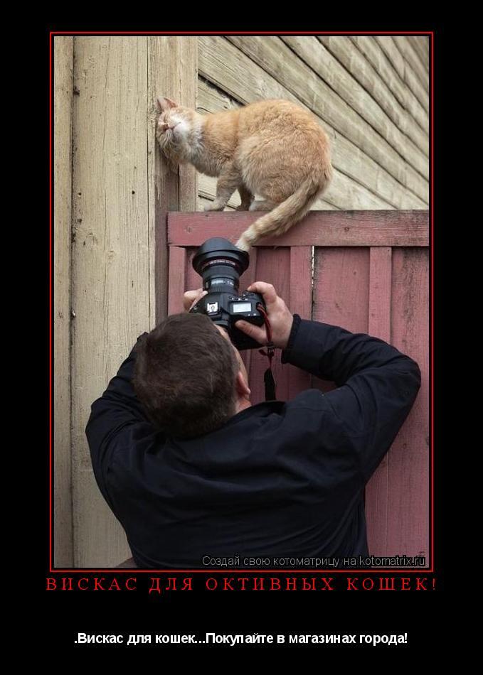Котоматрица: Вискас для октивных кошек! .Вискас для кошек...Покупайте в магазинах города!