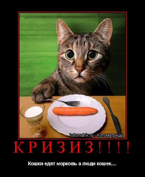 Котоматрица: Кризиз!!!! Кошки едят морковь а люди кошек....