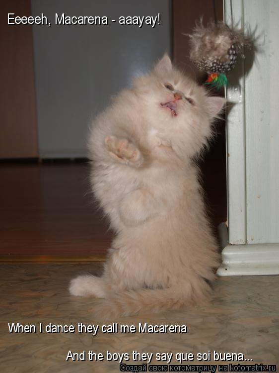 Котоматрица: When I dance they call me Macarena And the boys they say que soi buena... Eeeeeh, Macarena - aaayay!