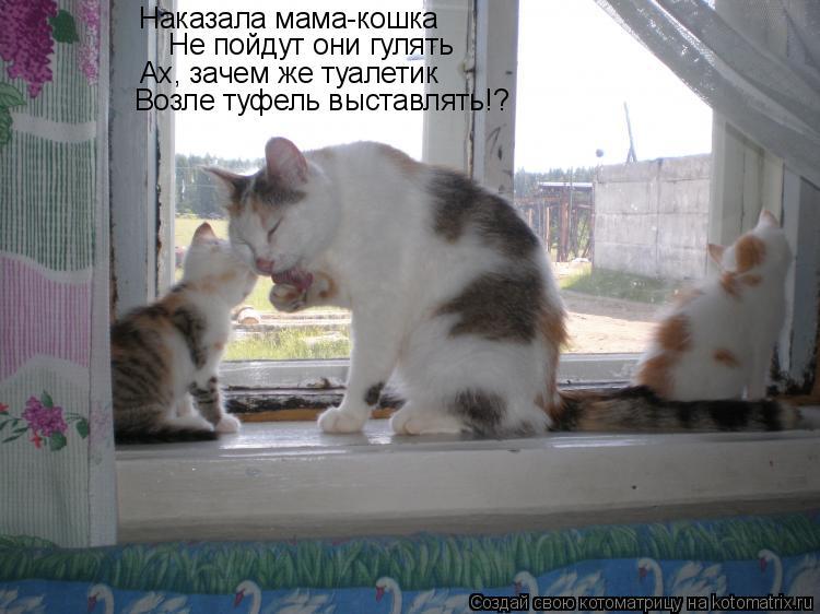 Котоматрица: Наказала мама-кошка Ах, зачем же туалетик Не пойдут они гулять Возле туфель выставлять!?