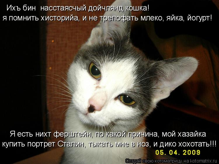 Котоматрица: Ихъ бин  насстаясчый дойчлянд кошка! я помнить хисторийа, и не трепофать млеко, яйка, йогурт! Я есть нихт ферштейн, по какой причина, мой хаза