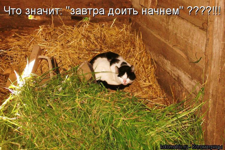 """Котоматрица: Что значит: """"завтра доить начнем"""" ????!!!"""