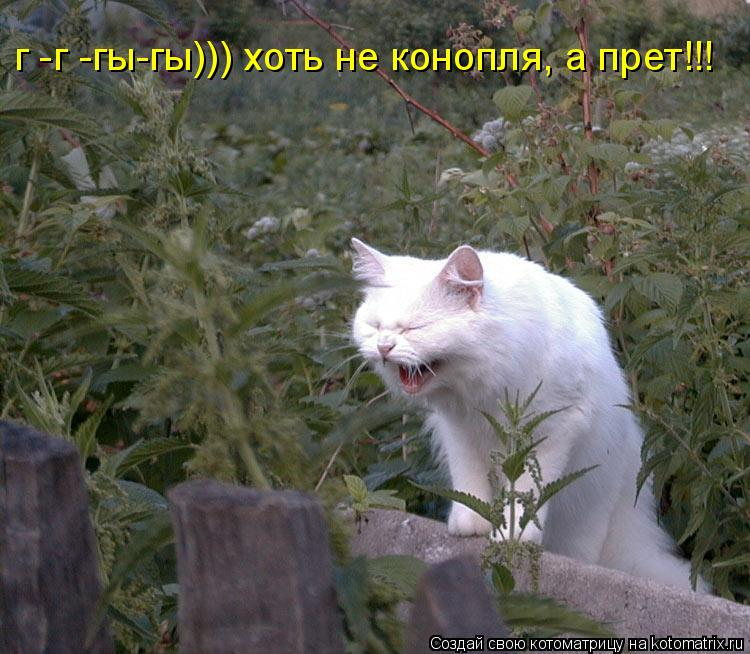 Котоматрица: г -г -гы-гы))) хоть не конопля, а прет!!!