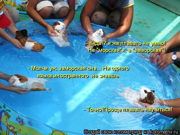 """Котоматрица: - Куда!? я же плавать не умею! Не """"морская""""я, а """"заморская""""!  - Молчи уж, заморская она... Ни одного - Точно!Проще плавать научиться! языка иностран"""