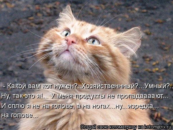 Котоматрица: - Какой вам кот нужен?..Хозяйственнный?...Умный?... Ну, так это я!... У меня продукты не пропадаааают... И сплю я не на голове, а на ногах...ну...изре