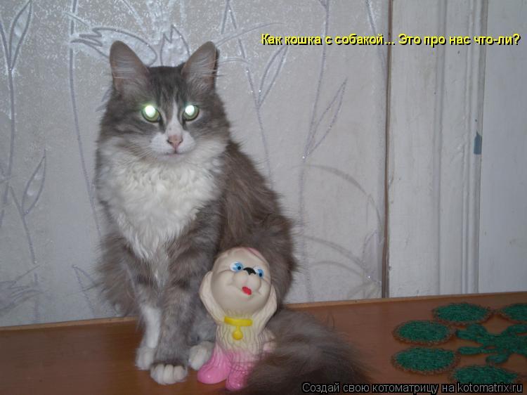 Котоматрица: Как кошка с собакой... Это про нас что-ли?