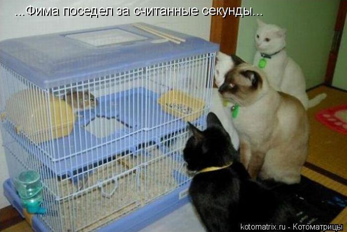 Котоматрица: ...Фима поседел за считанные секунды...