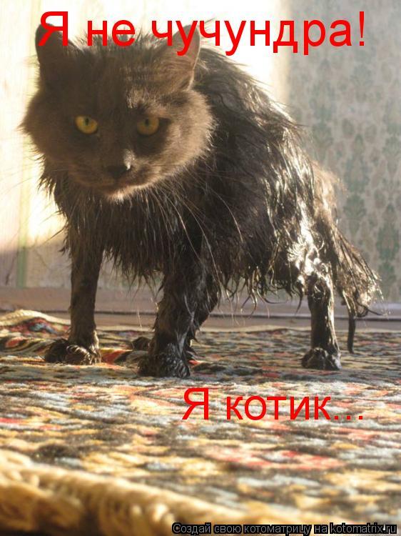 Котоматрица: Я не чучундра! Я котик...