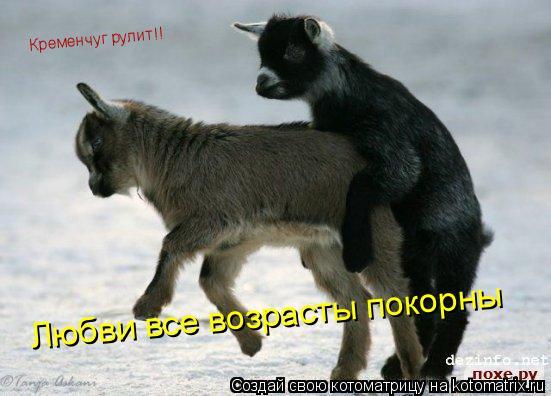 Котоматрица: Любви все возрасты покорны Кременчуг рулит!!