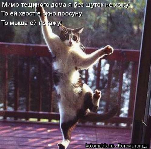 Котоматрица: Мимо тещиного дома я без шуток не хожу! То ей хвост в окно просуну, То мыша ей покажу!