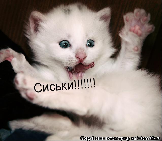 Котоматрица: Сиськи!!!!!!!